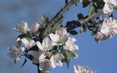 How to Pollinate Fruit-Bearing Trees Without Bees