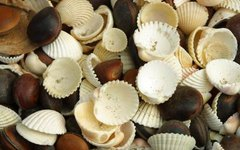 How to Decorate Pottery With Seashells