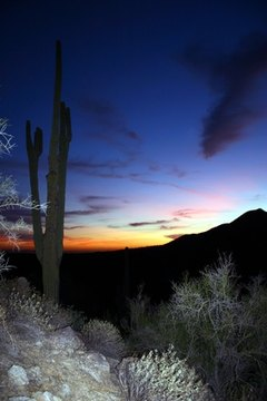 The Sonoran Desert is one of the deserts of the southwestern United States.