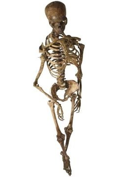 The human body needs the skeletal system in order to survive.