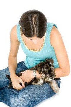Scratching your dog can activate her scratch reflex.