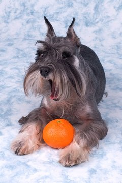 Peel an orange and share a slice with your dog.