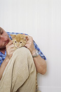 Positive early experiences make felines more loving.