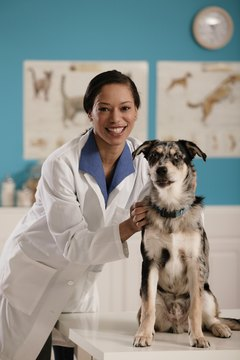 Most veterinary technicians work in clinical practice caring for dogs and cats.