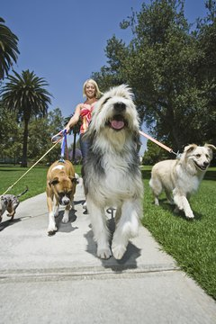Multiple dogs on multiple leashes can be very difficult to control.