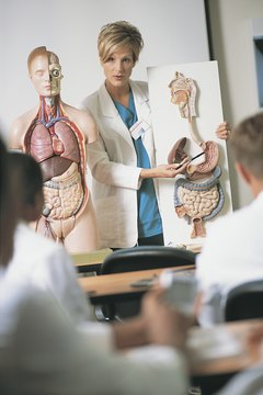 Some schools offer a PhD in anatomy or a joint MD-PhD with an anatomy focus.