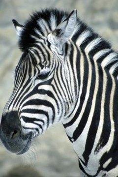 tell zebra habitat