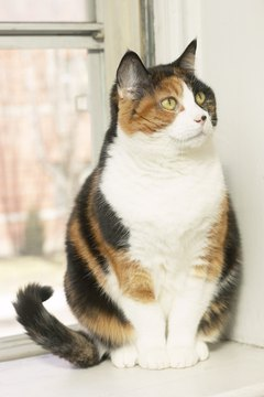 Diet and exercise can help your cat lose weight.