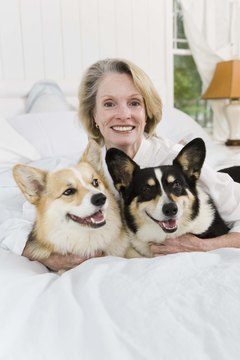 Corgis are known as the Royal Dog of England.