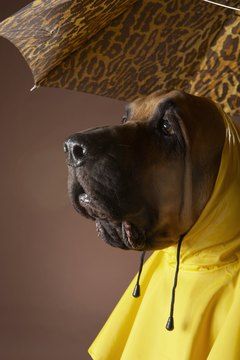Protect your dog from the elements with a raincoat.
