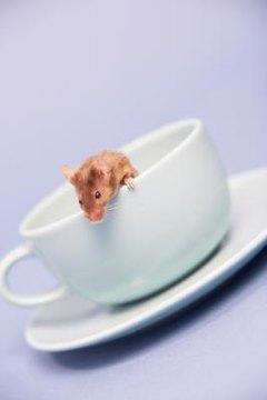 Best Odor Control Rat Bedding