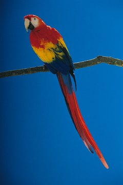 Parrots need shade and wind breaks in outdoor aviaries.