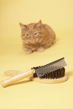 Regular grooming can help cut down on excessive cat shedding.