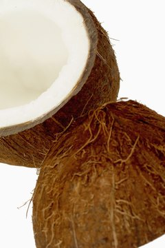 Coconut oil is a major food source of medium-chain triglycerides.