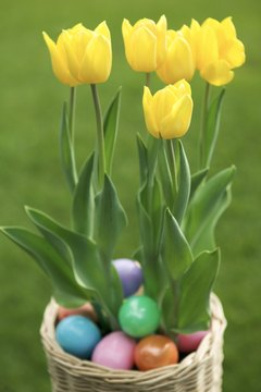 Tulips symbolize the forgiveness emphasized at Easter.