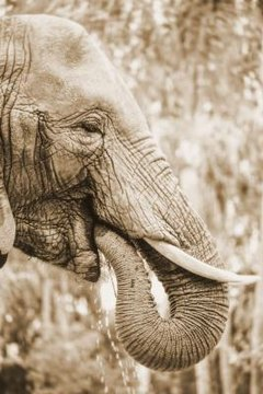 The Adaptations of Elephants for Survival | Animals - mom.me