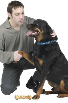Rottweilers are big, tough dogs that make insurance companies nervous.