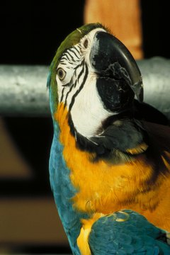 Parrots are very sensitive animals.