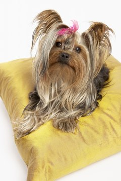 Provide your 11-month-old Yorkie with a comfortable dog bed or pillow for lounging and sleeping.