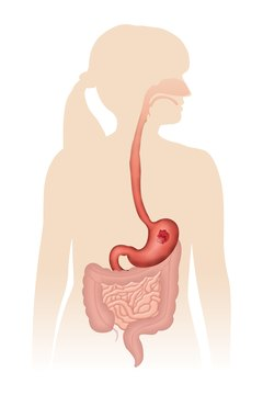 Protein is digested in your stomach and absorbed in your small intestine.