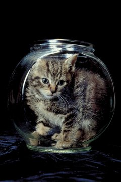 The only thing better than vaccinations for protecting your kitten is a glass bubble.