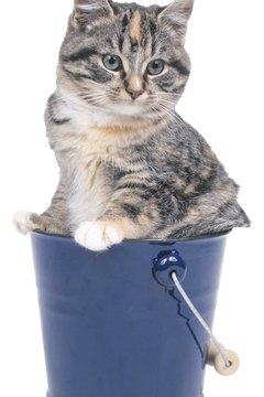 Your cat's litter box is more like a bus stop than a home for fleas.