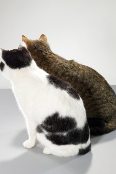 Cats do bond with their feline companions, becoming depressed if they pass away.