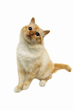 Your cat's itchiness may be more than just dry skin.