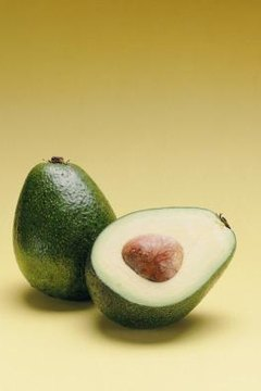 Avocado trees may take 10 to 15 years to bear fruit.