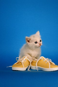 Kittens often like to chew on their owners' shoes.