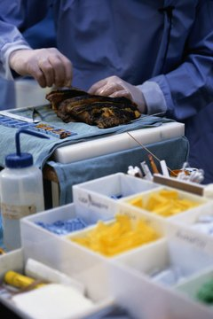 Forensic autopsy technicians work for government agencies and private companies.