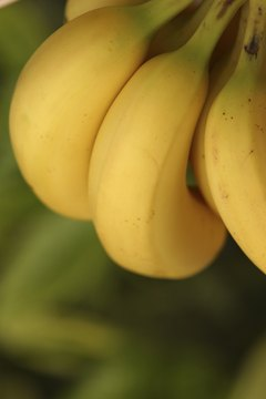 Bananas are potassium powerhouses.