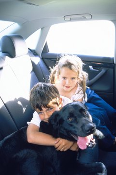 Expose your dog to the car when it's not moving -- or the destination is fun -- and the crying should stop.