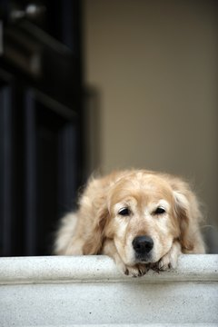 If your dog stops at the steps, you have to figure out why.