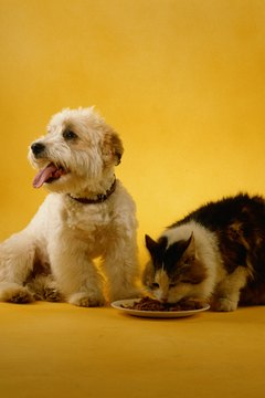 When dogs and cats communicate with one another it's called interspecific communication.