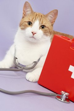 Correctly administering pills can help keep your cat healthy.