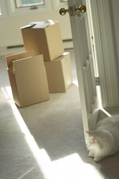 Cats and cardboard boxes go together like peanut butter and jelly.
