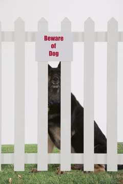 A strong fence is necessary to keep your dog contained.