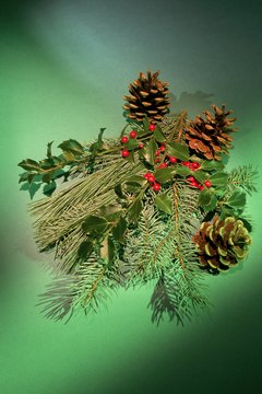 Evergreens make for festive decorations, but they also make for toxic cocktails for cats.