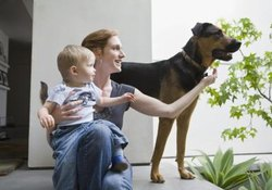 How to Adapt Dogs to Your Baby