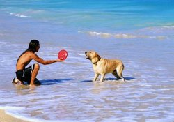 What Age Do You Start Frisbees for Dogs?