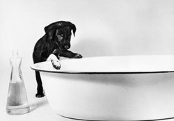 How Long for a Sitz Bath for a Dog's Paws?