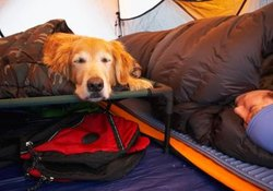 Arthritic Beds for Dogs