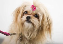 How to Make Rubber Band Hair Bows for Dogs