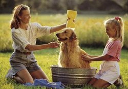 Bathing a Dog Without Water