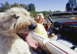 Auto Insurance That Will Insure a Dog While Traveling
