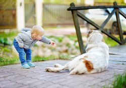 What Type of Dog Is Safe for Children?