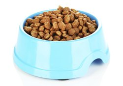 Dry Dog Food for Urinary Tract Health