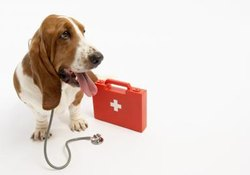 Side Effects of Pyrantel Pamoate for Dogs