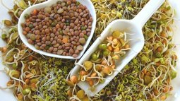 What Are the Benefits of Sprouting Seeds?